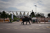 An elephant walks past the main entrance of the Jawaharlal Nehru Stadium in New Delhi, India.
