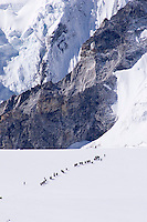 A Tibetan Yak Train at 18,000 feet going from Tibet to Nepal Over the Nangpa La