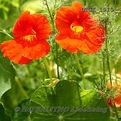 Gisela, FLOWERS, BLUMEN, FLORES, photos+++++,DTGK1913,#f#