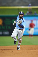 Charlotte Stone Crabs third baseman Cristian Toribio (16) runs the bases after hitting a home run during a game against the Clearwater Threshers on April 12, 2016 at Bright House Field in Clearwater, Florida.  Charlotte defeated Clearwater 2-1.  (Mike Janes/Four Seam Images)
