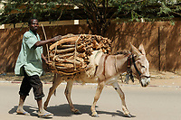 NIGER Maradi, firewood transport with donkey