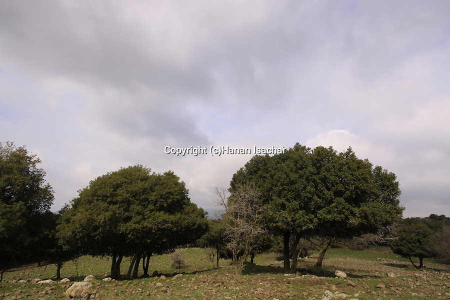 Golan Heights, Odem Forest