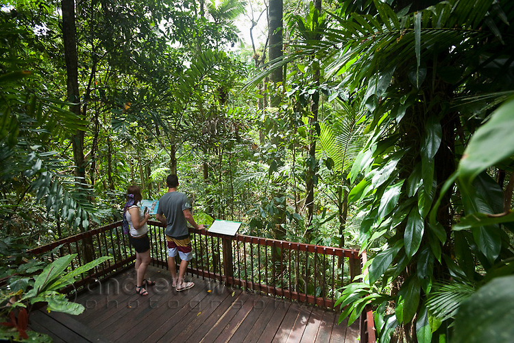 Tourists look out over rainforest surrounds at Daintree Rainforest Discovery Centre.  Daintree National Park, Queensland, Australia
