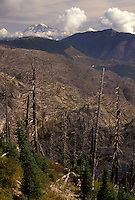 AJ3697, Mount Saint Helens, volcano, Mount St. Helens National Volcanic Monument, Cascades, Cascade Range, Washington, View of the barren volcanic landscape after the 1980 eruption at Mount St. Helens National Volcanic Monument in the state of Washington.