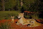 SNAG Animals & Icons