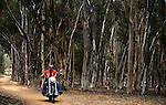SAN DIEGO, CA - JULY 21:  Helmut Werb rides a Harley Davidson Softtail through eucalyptus trees during the Harley Davidson Release test ride for Stern Magazine on July 21 in San Diego, California. (Photo by Donald Miralle) *** Local Caption *** Helmut Werb