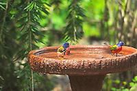 male painted buntings bathing in a birdbath