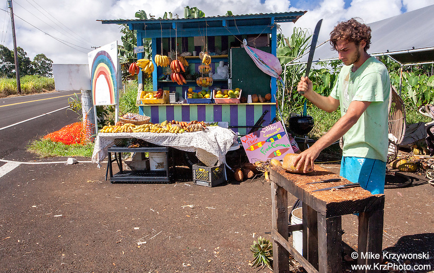 Caucasian male chopping coconut at a roadside fruit stand on the Big Island in Hawaii