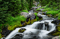 Paradise Creek, Mount Rainier National Park, Washington