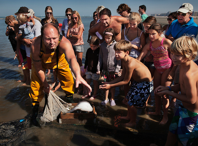Xavier Vanbillemont unloading the morning's catch on the beach, to the fascination of onlookers at Oostduinkerke, Belgium.<br /> <br /> Throughout the summer months, the Belgian Tourist Board fund the fishermen to carry out additional fishing trips at advertised times, which attract over 10,000 visitors a year. <br /> <br /> Xavier is one of the twelve remaining horseback shrimp fishermen of Oostduinkerke.