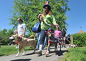Dogwood Walk