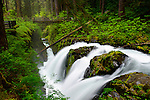 Olympic national park and Sol Duc falls and trail