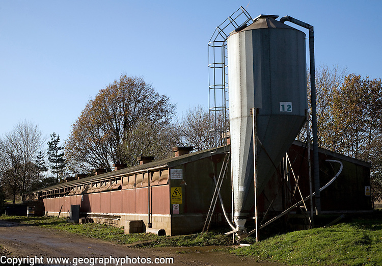 Grain silo for indoor pig production unit, Sutton, Suffolk, England