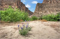 From the basin of Saint Elena Canyon in Big Bend National Park, this bluebonnet found a nice home in the sand. Bluebonnets like this can be found all over this park and along the roads in February and March.