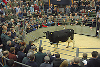 Blackisle Pauline 56 selling for 1,600 gns.