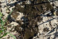 GERMANY, spreading of slurry in grain field, slurry from cattle stables increase nitrate content in groundwater / DEUTSCHLAND, Schleswig-Holstein, Duengung eines Getreide Feldes mit Gülle, Gülle aus Tierställen belastet Boden und Grundwasser mit Nitrat