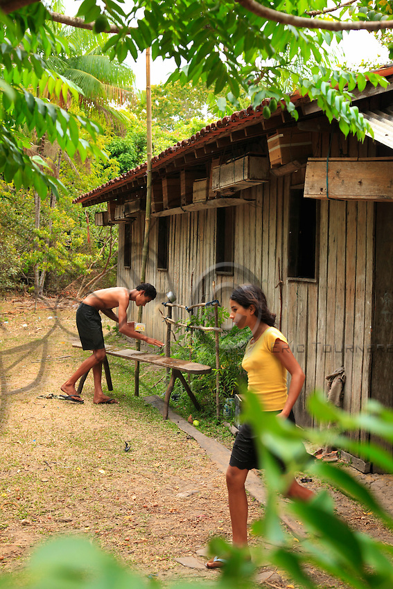 Brazil, State of Para. Like the Indians before them, the peasants of Indian and Portuguese mixed-race origins, called Caboclos in the region, have semi-domesticated the bees by setting them up in thrown together hives of bamboo or just simply wooden cases near their houses.