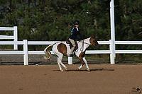 Small Pony Candids