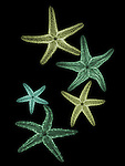 X-ray image of fuzzy sea stars (greens on black) by Jim Wehtje, specialist in x-ray art and design images.