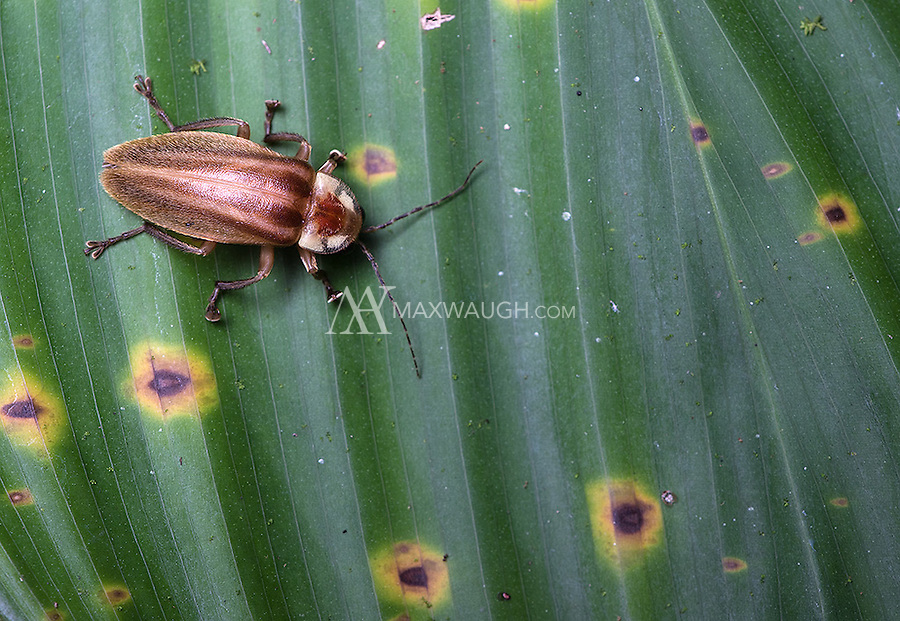 As you might expect, there are loads of bugs in the jungle.<br />