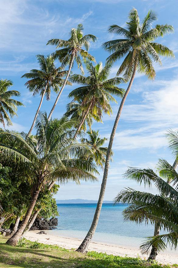 Taveuni, Fiji; palm trees line a beach overlooking Somosomo Strait in early morning sunlight