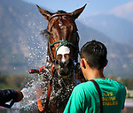 ARCADIA, CA April 7: Bolt D' Oro after the Santa Anita Derby (Grade I) on April 7 at Santa Anita Park in Arcadia, CA (Photo by Chris Crestik/ Eclipse Sportswire/ Getty Images)