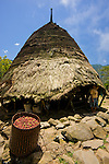 Basket of red coffee beans in front of traditional house, Wae Rebo, Flores.