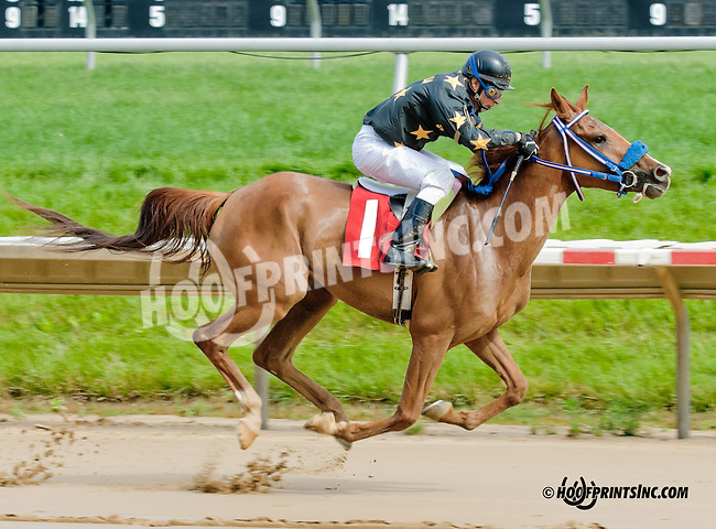 Sugar Sand winning at Delaware Park on 6/13/13