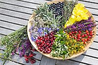 Spätsommer Blütenteller und Früchteteller. Blüten, Blumen, Kräuter, Kräuter sammeln, Kräuterernte, Blüten und Früchte auf einem Teller sortiert, bunt, essbare Blüten und Früchte. Nachtkerze, Oenothera spec., Evening Primrose, Evening-Primrose, Evening star, Sun drop, Onagre. Gewöhnlicher Beifuß, Beifuss, Artemisia vulgaris, Mugwort, common wormwood. Heckenrose, Rose, Hagebutte, Hagebutten, Rosa canina, Rose. Blutweiderich, Blut-Weiderich, Lythrum salicaria, Purple Loosestrife, Spiked Loosestrife, Salicaire. Wasser-Minze, Wasserminze, Minze, Mentha aquatica, Horsemint, Water Mint. Weiße Taubnessel, Weisse Taubnessel, Lamium album, white nettle, white dead-nettle, white deadnettle. Schafgarbe, Wiesen-Schafgarbe, Schafgabe, Achillea millefolium, Common Yarrow. Salbei, Salvia spec., Sage. Tüpfel-Johanniskraut, Echtes Johanniskraut, Tüpfeljohanniskraut, Hypericum perforatum, St. John´s Wort. Wegwarte, Zichorie, Cichorium intybus, Chicory. Schlehe, Schlehen, Schwarzdorn, Prunus spinosa, Blackthorn, Sloe. Kornelkirsche, Kornel-Kirsche, Kornellkirsche, Kornel, Kornell, Cornus mas, Cornelian Cherry. Fruit, fruits, Blossom, blossoms, flower, flowers, bloom, blooms, petal, petals.