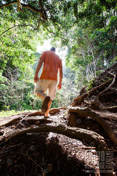 Man walking on a trail near the Pali lookout, Oahu