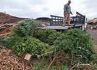 Mark Reiner of Oakland Nursery tosses one of about 20 leftover Christmas trees into the recycling pile at Kurtz Brothers on Westerville Road. The trees came from the company's sales lot at Glengary Shopping Center that opened the day after Thanksgiving.