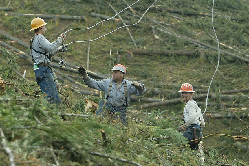 From left, Plikat Logging choker setter David Murphy, second rigger Justin Murphy, David's nephew, and rigging slinger Dan Parker, grap a hold of chokers on the side of a hill near Anlauf, Ore., May 16, 2003. Dan Parker is a fourth generation logger. His father heads up crew on another hill.