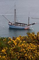 Europe/France/Bretagne/56/Morbihan/ Belle-Ile-en-Mer/Sauzon: Landes d'ajoncs et vieux gréements