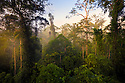 Lowland dipterocarp rainforest canopy at dawn. Danum Valley, Sabah, Borneo, Malaysia.