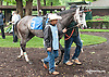How about Him at Delaware Park on 5/18/15