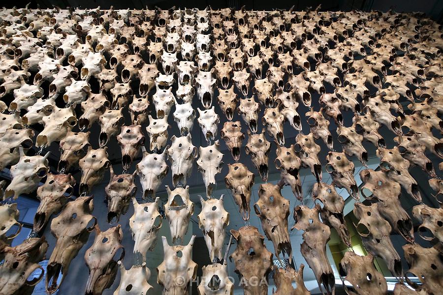 Kassel, Germany. Opening days of documenta14.<br /> Neue Neue Galerie.<br /> M&auml;ret &Aacute;nne Sara: Pile o' S&aacute;pmi, 2017