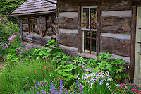 WASJ_D194 - USA, Washington, San Juan Islands, Orcas Island, Wildflowers in bloom at Orcas Island Historical Museum.