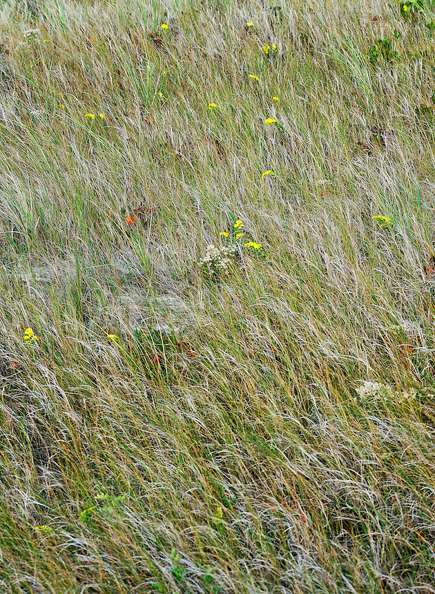 Grass and wildflower meadow.