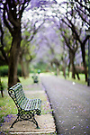 Empty bench with trees in a park, Seville, Spain