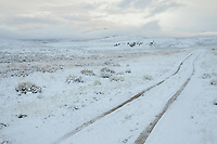 Fresh snow covers a two-track through Gunnison Sage-Grouse habitat on BLM land. Gunnison County, Colorado. April.