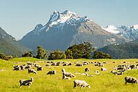 rural | New Zealand