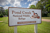 The Pond Creek National Wildlife Refuge is a 27,300 acre wildlife refuge located in Sevier County, Arkansas managed by the United States Fish and Wildlife Service.<br /> <br /> The Pond Creek National Wildlife Refuge was created in 1994 and is located approximately 30 miles north of Texarkana, Arkansas and 10 miles southeast of De Queen, Arkansas. Pond Creek is made up of various oxbow lakes, sloughs, and bottomlands hardwood areas along the Little and Cossatot Rivers.<br /> <br /> Pond Creek was created in order to protect the wetland and bottomland hardwood habitat and to serve as a habitat for neo-tropical migratory birds. It also serves as an important nesting habitat for wood ducks and wintering habitat for other migratory waterfowl. It is located where the Mississippi and Central Flyways intersect.