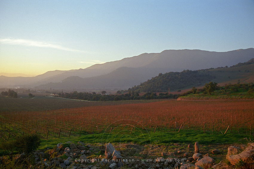 Vineyard. Bodega Altair, Region del Maule, Chile