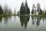 Oregon, Wallowa Mountains. Pine trees reflect in the water of a high mountain pond as fog rises out of Hells Canyon obscurring the view into Idaho.
