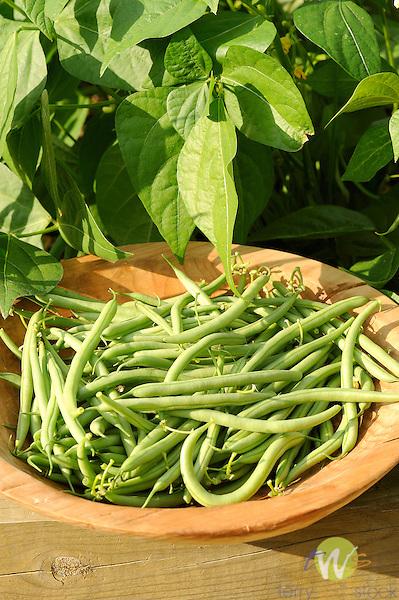 Fresh picked tendergreen beans.