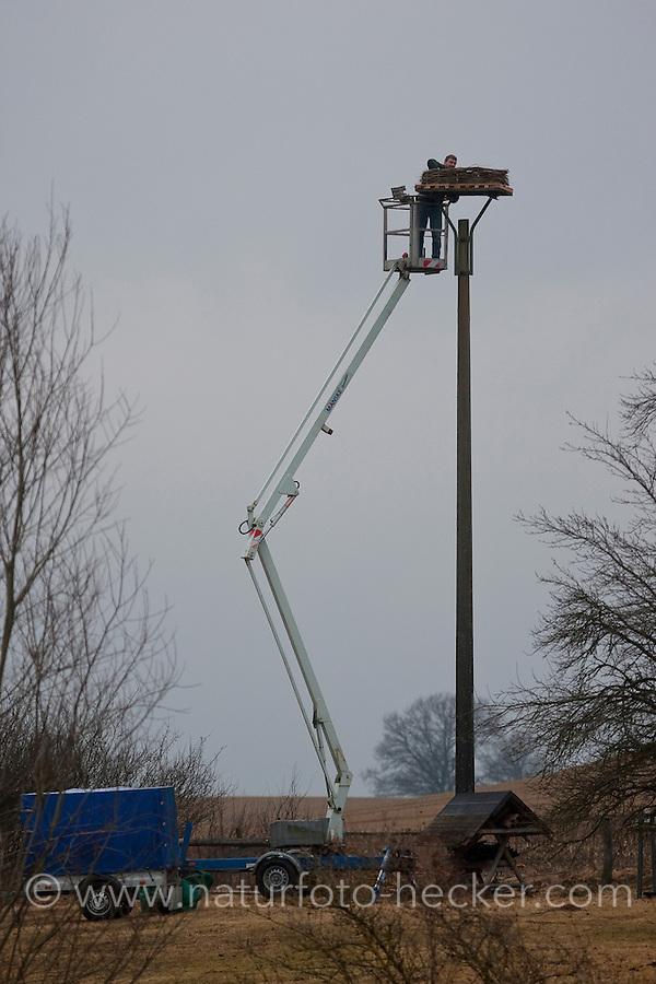 Vogelschützer bauen Nestplattform, Nisthilfe für Weißstorch, Weisstorch, Weiß-Storch, Vogelschutz, mit Hubwagen, Storch, Ciconia ciconia, White Stork, Cigogne blanche
