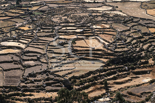 Colca canyon, Peru. Patchwork of pre-Inca agricultural terraces looking very arid and dry with some cattle.