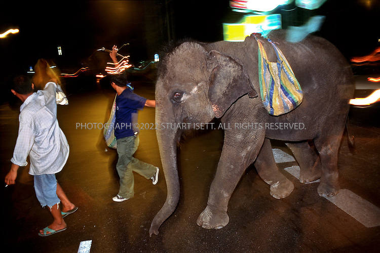 3/15/2000--Bangkok, Thailand..Ploy is led across Bangkok's busy Sukhumvit Road...Photograph by Stuart Isett.©2004 Stuart Isett. All rights reserved