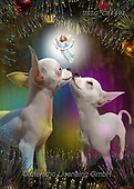 CHIARA,CHRISTMAS ANIMALS, WEIHNACHTEN TIERE, NAVIDAD ANIMALES, paintings+++++,USLGCHI491,#XA# ,funny ,funny