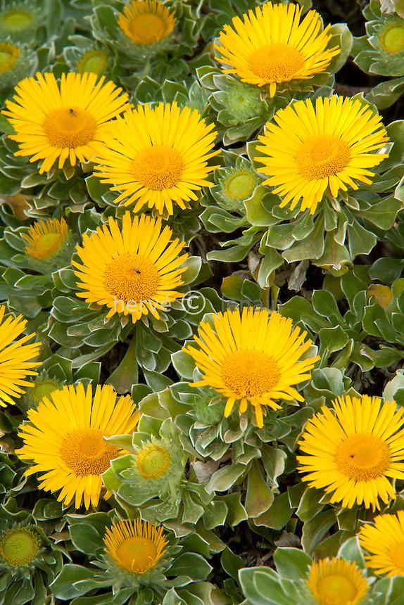 Le Domaine du Rayol:<br /> dans le jardin des Canaries,